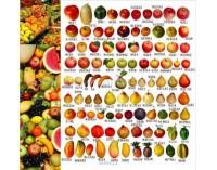 Декоративни плодове - опаковка 5 бр.